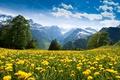 Картинка одуванчики, ущелье, луг, поляна, горы, цветы, деревья