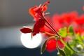 Картинка цветок, листья, свет, блеск, лепестки, стебель, блик
