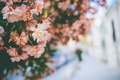 Картинка цветы, куст, лепестки