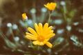 Картинка цветы, желтые, лепестки