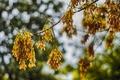 Картинка осень, дерево, боке