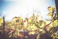 Картинка листья, ветки, зеленые