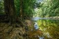 Картинка лес, деревья, ручей, камни, США, кусты, Battlefield