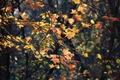 Картинка осень, лес, листья, ветки