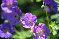 Картинка природа, лепестки, сад, двор, клумба