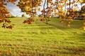 Картинка поле, осень, трава, листья, солнце, ветки