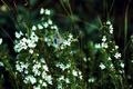 Картинка бабочка, цветы, зелень, боке