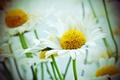 Картинка flowers, bokeh, petals, stalks