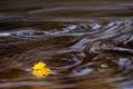 Картинка осень, лист, река