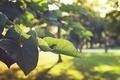 Картинка зеленые, листья, лето