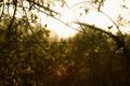 Картинка листья, Природа, солнце, ветви