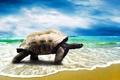 Картинка песок, море, пляж, берег, черепаха