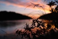 Картинка закат, лист, Макро