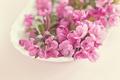 Картинка цветение, розовые, макро, цветы