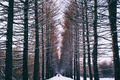 Картинка зима, лес, снег, люди, аллея