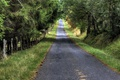 Картинка дорога, деревья, осень