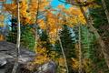 Картинка осень, лес, небо, деревья, камень, багрянец