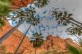 Картинка небо, облака, пальмы, скалы