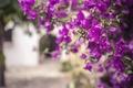 Картинка цветы, ветки, лепестки