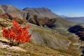 Картинка дорога, осень, горы, дерево, склон