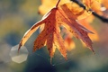 Картинка осень, листья, природа, паутина