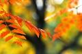 Картинка ветка, листья, осень