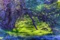 Картинка осень, трава, дерево, hdr, аетки
