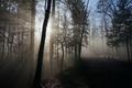 Картинка утро, свет, лес