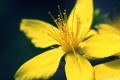 Картинка цветок, желтый, зум, лето