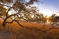 Картинка трава, солнце, лучи, дерево, изогнутое