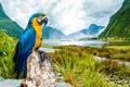 Картинка пейзаж, попугай, ара, Macaw, Сине-жёлтый ара