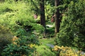 Картинка зелень, деревья, парк, дорожка, Великобритания, кусты, North Wales
