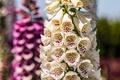Картинка лето, макро, цветы, природа
