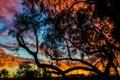 Картинка зарево, силуэт, деревья, облака, небо