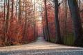 Картинка осень, деревья, дорога
