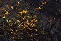 Картинка листья, ветки, природа