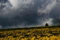 Картинка storm, trees, field, flowers, gray clouds, rainy