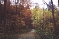 Картинка зелень, осень, лес, листья, ветки, дорожка