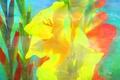 Картинка макро, текстура, лепестки, гладиолус