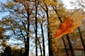 Картинка осень, макро, лист, дуб