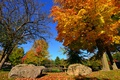 Картинка осень, небо, парк, камни, дерево, забор