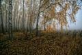 Картинка поле, лес, туман