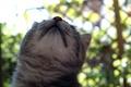 Картинка кот, кошка, шерсть, усы