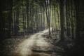 Картинка дорога, лес, свет, деревья