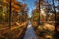 Картинка путь, небо, солнце, деревья, осень, лес