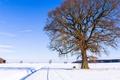 Картинка зима, дорога, небо, снег, природа, дерево, скамья