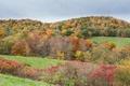 Картинка поле, осень, лес, небо, трава, холмы, кусты