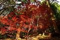 Картинка деревья, листья, лес, осень