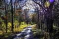 Картинка дорога, осень, лес, солнце, деревья, блики, обработка