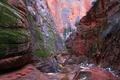 Картинка деревья, скалы, каньон, ущелье, Юта, США, Zion National Park